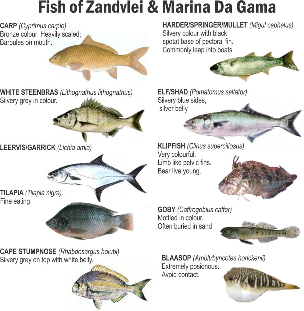 marina da gama fish